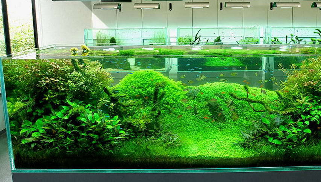 aquariums outreach team worked - 1440×709