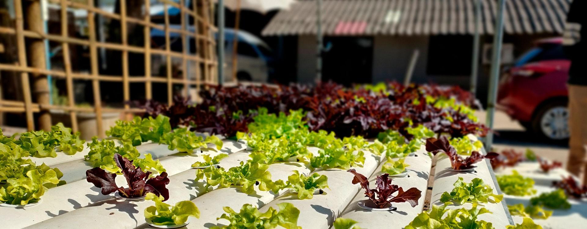 Измерение pH пивного затора в процессе варки пива