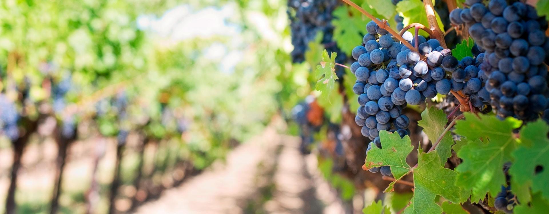 Измерение фторида в биологических жидкостях