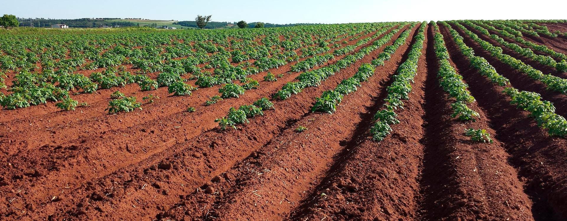 5 советов для эффективной калибровки pH-метра